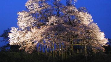 満開!樹齢100年 浅井の一本桜